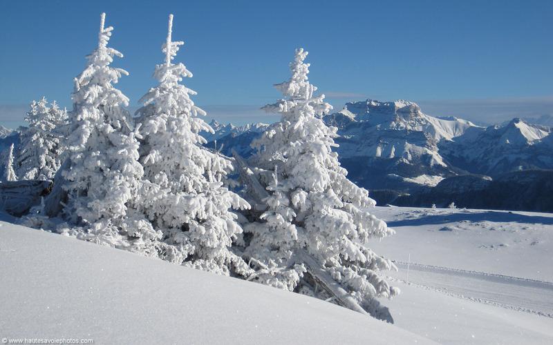 Everitouthéque est à la neige jusqu'au 7 janvier